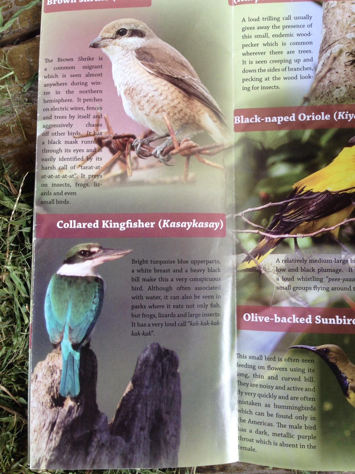 Wild Bird Club of the Philippines