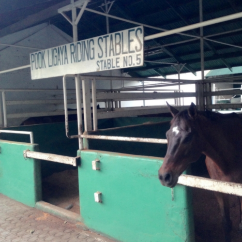 horses in manila