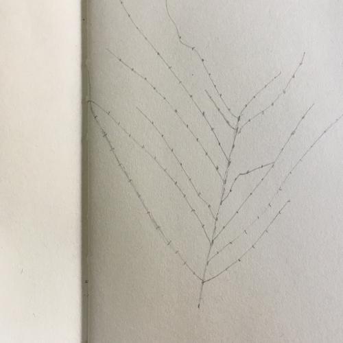 nature study
